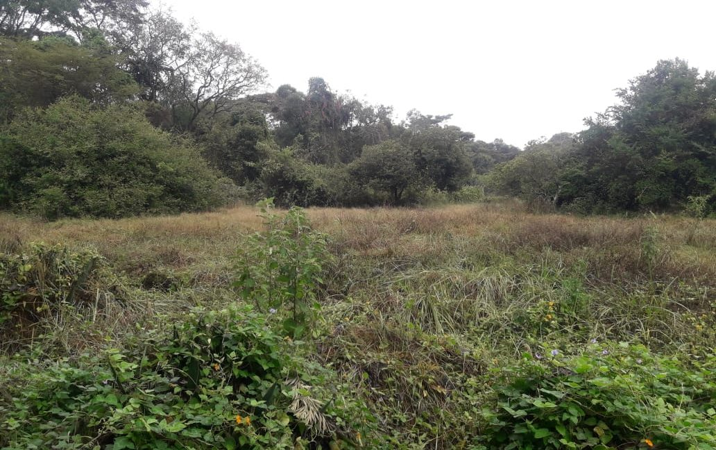 5 Acres Of Land for sale in Hardy at KSH50M Per Acre with a Beautiful Cottage1
