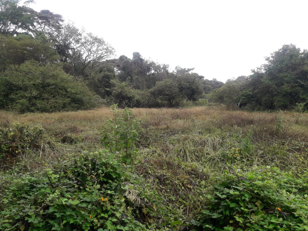 5 Acres Of Land for sale in Hardy at KSH50M Per Acre with a Beautiful Cottage