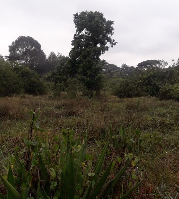 5 Acres Of Land for sale in Hardy at KSH50M Per Acre with a Beautiful Cottage10
