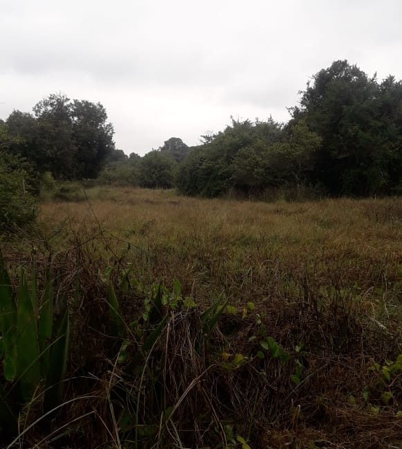 5 Acres Of Land for sale in Hardy at KSH50M Per Acre with a Beautiful Cottage11