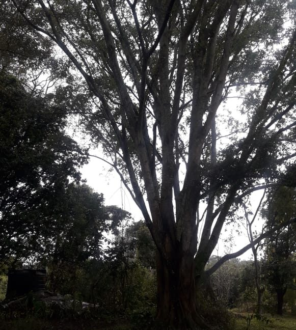5 Acres Of Land for sale in Hardy at KSH50M Per Acre with a Beautiful Cottage14