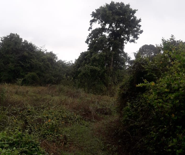 5 Acres Of Land for sale in Hardy at KSH50M Per Acre with a Beautiful Cottage8