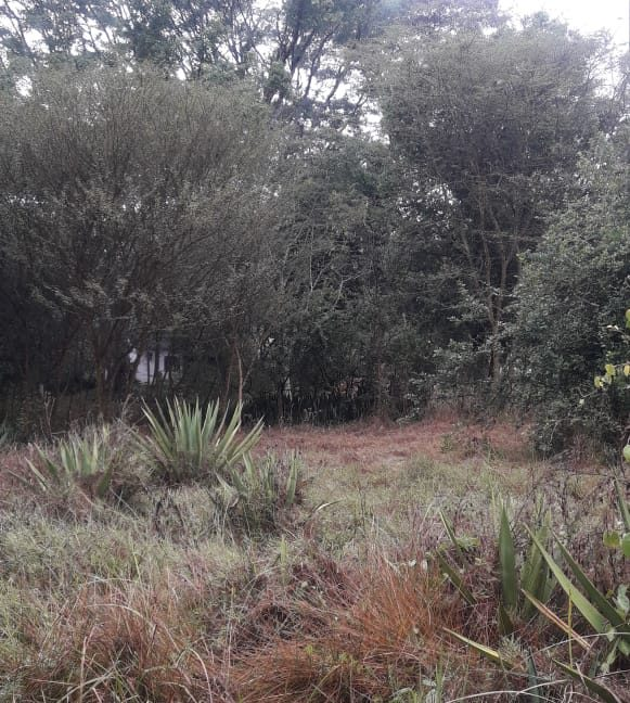5 Acres Of Land for sale in Hardy at KSH50M Per Acre with a Beautiful Cottage9